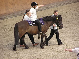 320px-Therapeutic horseback riding 2
