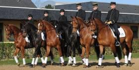Horse Ambulation Designed for Human Benefit