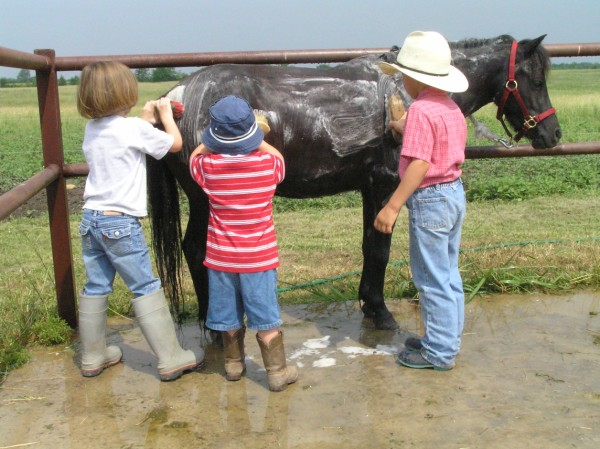 buckaroo pony camp600 x 449